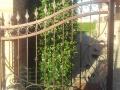 cancello07