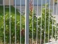 recinzione11